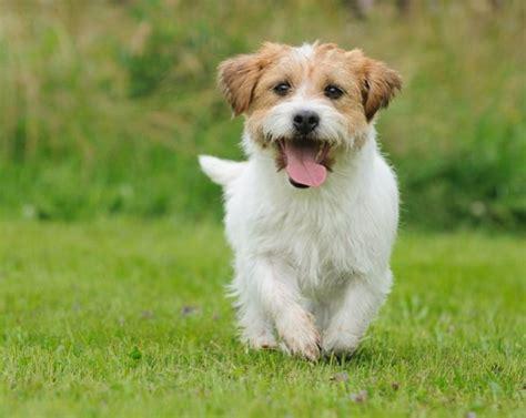 imagenes abstractas de un perro perros en tus sue 195 177 os