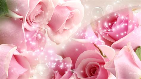 most beautiful pink roses hd wallpapers flowers pictures most beautiful pink roses wallpaper full hd pictures