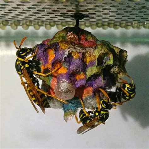 wasp images when given colored construction paper wasps build rainbow