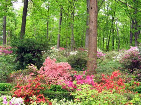Ideas 4 You: Rock garden ideas for shade areas