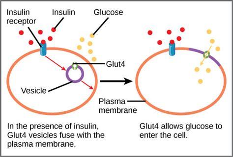 protinex diabetes care diabetes care specialty medicine mukilteo