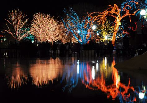 Why Chicago Is The Best City Even In The Winter Odyssey Zoo Lights Chicago