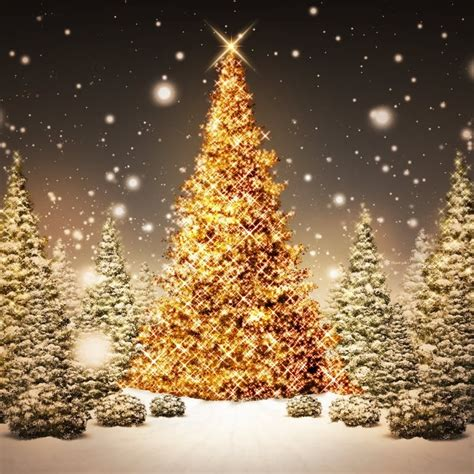 images of christmas nature christmas tree nature background international fashions