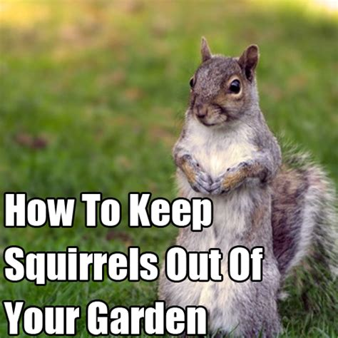 how to keep squirrels out of flower beds ways to keep