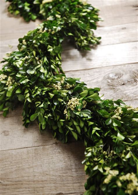 thick garland 45 quot preserved boxwood statice garland