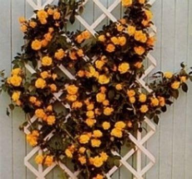catalogo fiori da giardino ricanti piante da giardino