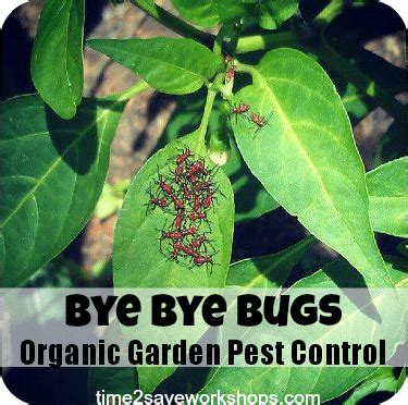 vegetable garden pests bye bye bugs organic vegetable garden pest