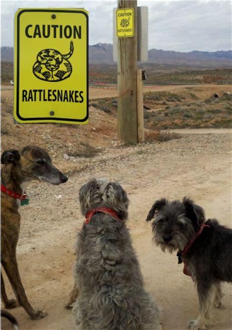 rattlesnake vaccine for dogs dogs at risk rattlesnake vaccine an option cedar city news