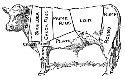 meat sections of a cow meat of cow clipart etc