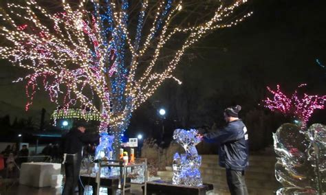 Chicago Lincoln Park Zoo Ice Carving Hilton Mom Voyage Lincoln Park Zoo Festival Of Lights