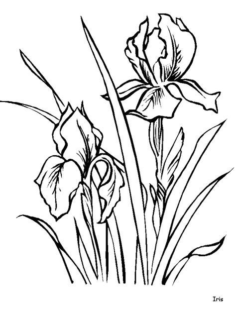 COLOREA TUS DIBUJOS: Flor Iris para colorear