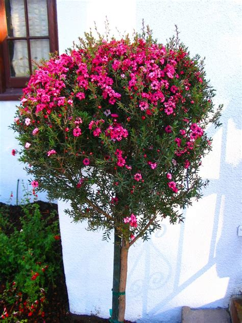 Green Leaf Renzo Basket 383 44 best images about hedge screens on