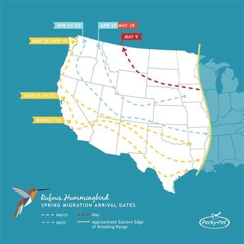 25 best ideas about hummingbird migration on pinterest