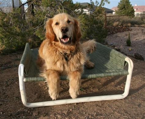play dog beds pet beds pet gates pet enclosures rover company