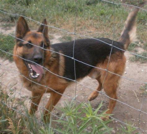 hunde suchen ein zuhause berlin hunde suchen ein zuhause tierschutztanten 183 das
