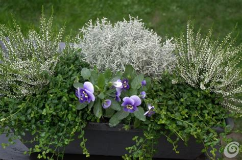 piante da davanzale piante da davanzale 28 images fioriera per davanzale