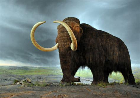 imagenes de animales extinguidos 60 animales extintos en todo el mundo y las causas lifeder