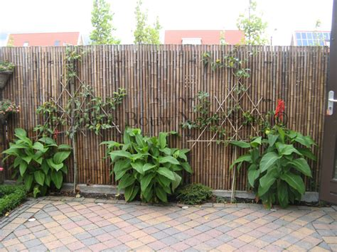Leuke Dingen Voor Aan De Schutting by Groot Assortiment Bamboe Tuincentrum Rokkeveen