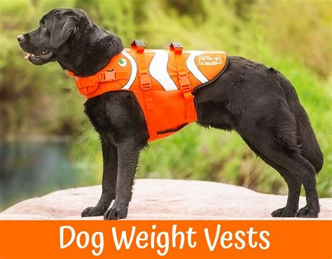 weight vest for dogs a comprehensive review of the best weight vests in 2017 us bones