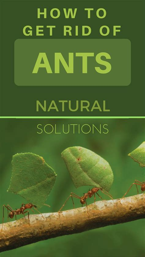 how to get rid of ants in my room 812 best images about outdoor living on arbors pathways and paths