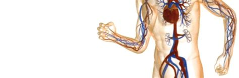 cro interno coscia trombosi venosa superficiale coscia gamba destra