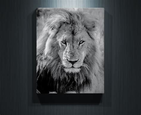 lion print lord of the lions rogue aurora photography