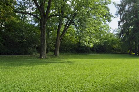 how to grow grass in backyard growing grass in the shade