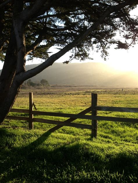 Garden Of Point Reyes Point Reyes On A Winter S Day Places I