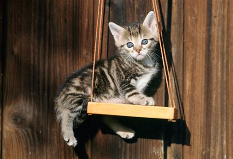 swing a cat hanging animal stock photos kimballstock