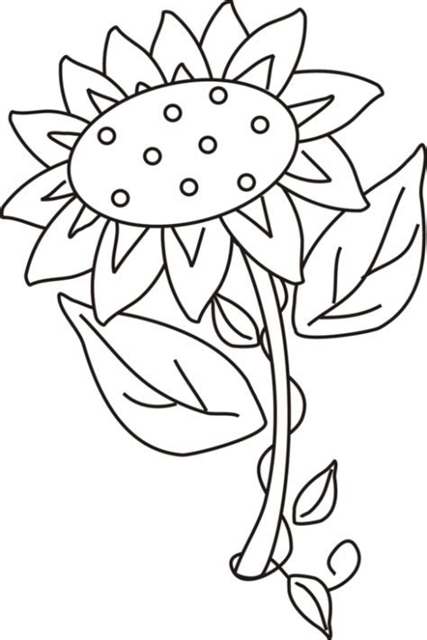 Sunflower Coloring Pages Bestofcoloring