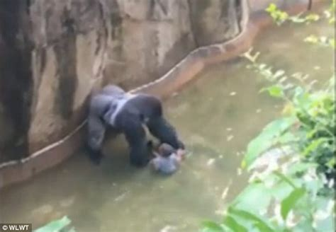 themes in the girl who fell from the sky cincinnati zoo gorilla harambe killed to protect boy who