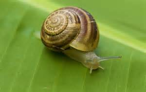 different types of snails in the garden interesting and facts about snails