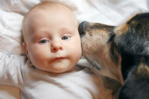 dogs with babies k9 of mine your care resource for a healthier happier canine