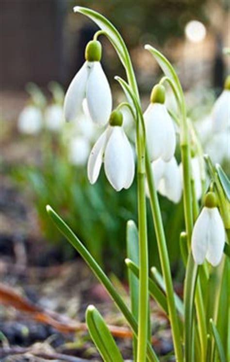 Flower Pot by Perce Neige