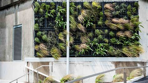 restaurant speisekammer somborn vertical garden nz plants on walls vertical garden