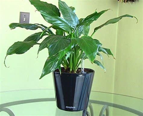 modern contemporary indoor self watering pots allmodern aquaphoric self watering planter 7 fiber soil