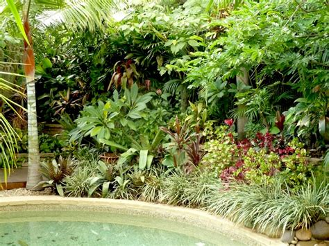 temperate climate tropical garden gardendrum tropical
