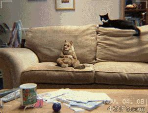 couch dance couch cat dances