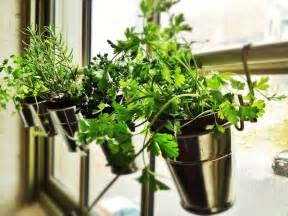 Hanging Window Herb Garden by Home Window Herb Garden