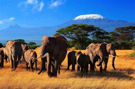 imagenes i love kenia informaci 243 n 250 til para viajeros sobre kenia informaci 243 n