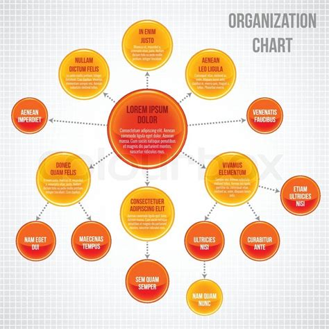 organizational chart infographic business bubbles circle