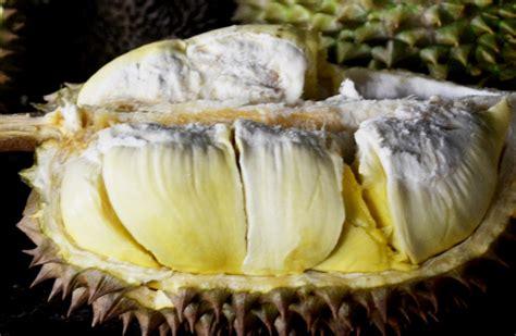 Bibit Durian Bawor Purwokerto rahasia durian tebal dan berbuah cepat purwokerto kita