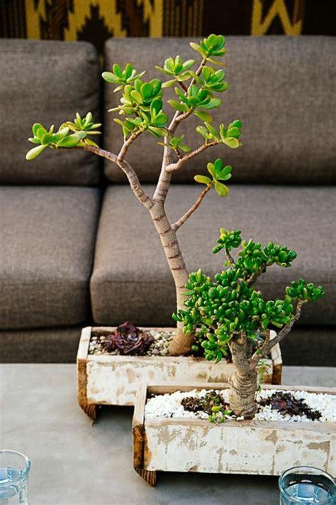 indoor bonsai kaufen 132 best zimmerpflanzen images on bonsai