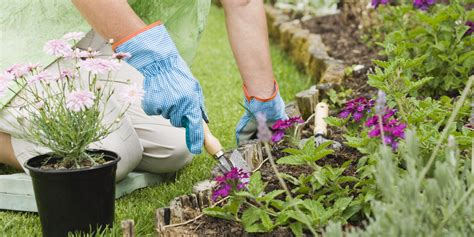 Planting A Flower Garden How Dementia Patients Benefit From Gardening Alzlive