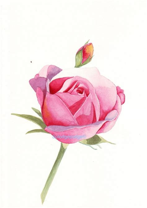 rosebud water color painting prints prints and watercolor painting