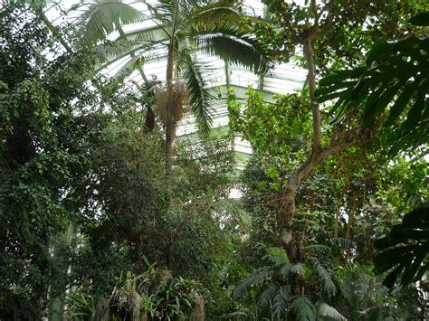 serre de jardins file jardin des plantes serre tropicale4 jpg wikimedia commons