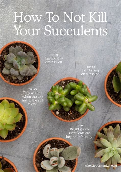 How To Propagate Cacti Succulents Apartment Therapy - 31 best succulent care tips images on