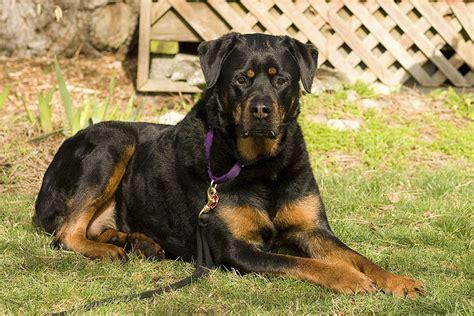 dinovite for dogs dinovite for dogs supplement overview dogsarena