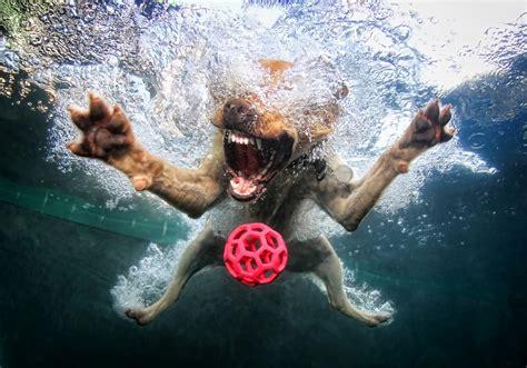 seth casteels underwater dogs photo gallery