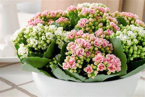 fiori recisi nomi fiori recisi durano 6 settimane 200 la nuova proposta